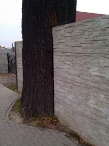 Drzewo w terenie zieleni001