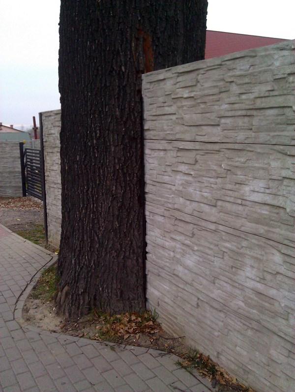 Bezmyślne zniszczenie drzewa. Wandalizm.