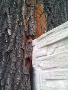 Drzewo w terenie zieleni002