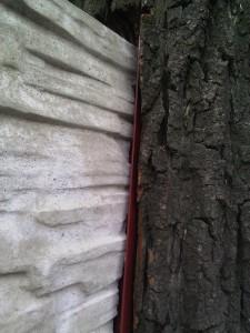 Drzewo w terenie zieleni004