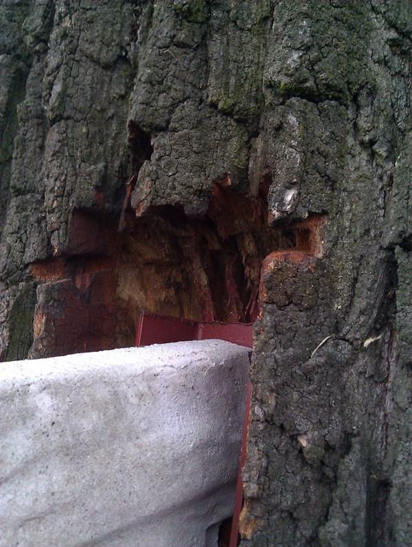 Bezmyślne zniszczenie drzewa.